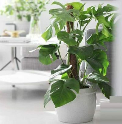 Coconut Coir Fibre Coco Pole Plant Support stake wood base Indoor Outdoor plants creepers 3 Feet