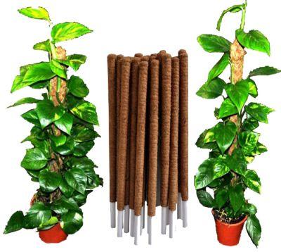Coco Coir Poles plant support 100% Biodegradable